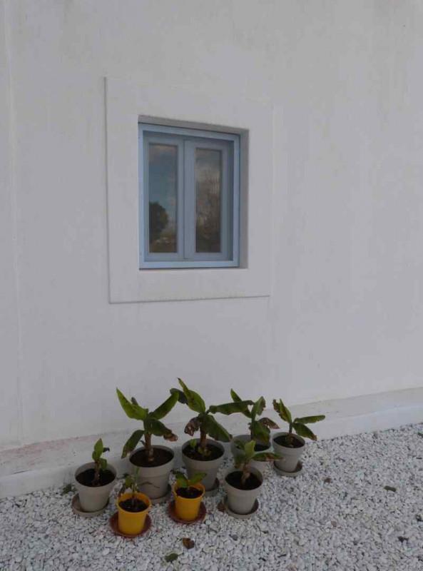 finca-blanca - P1090168 (arquitectura-sostenible)